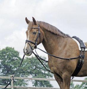 Longierschlaufer Dreieckszügel, Pony